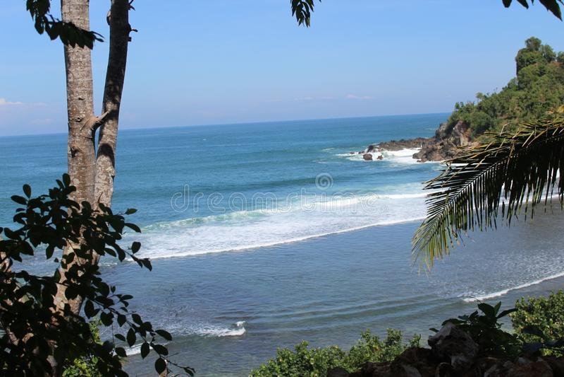 Boom op strand in Indonesië stock afbeelding