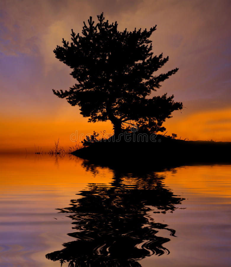 Download Boom Op Zonsondergangachtergrond Stock Foto - Afbeelding bestaande uit schoonheid, hemel: 10777466