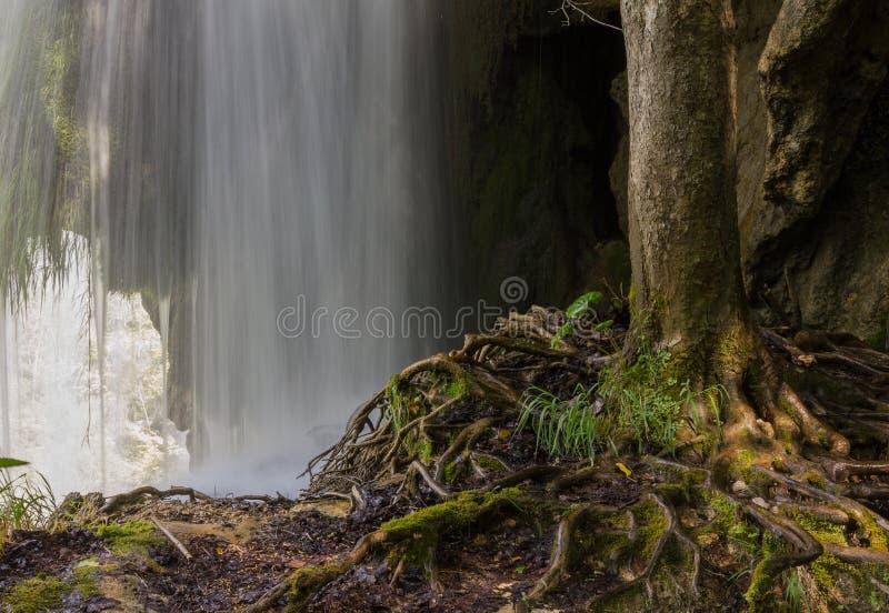 Boom over waterval int. hij plitvicepark Kroatië royalty-vrije stock fotografie