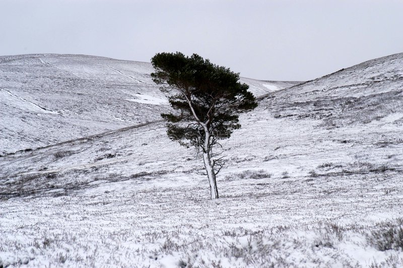 Boom in sneeuw stock afbeeldingen