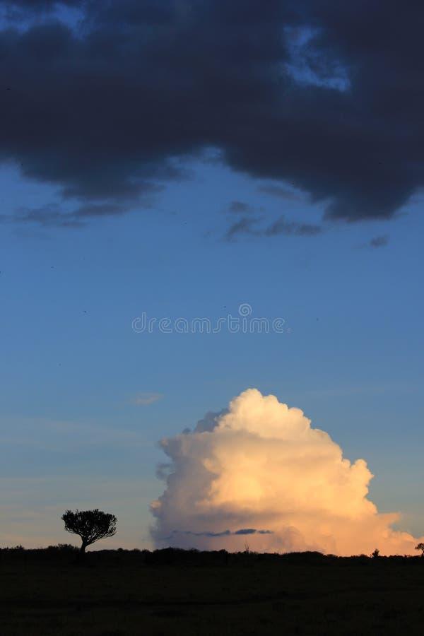 Boom tegenover wolken stock foto's