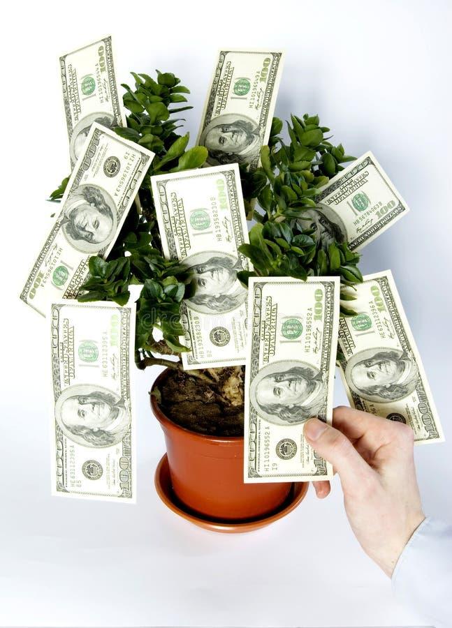Boom van geld royalty-vrije stock afbeeldingen