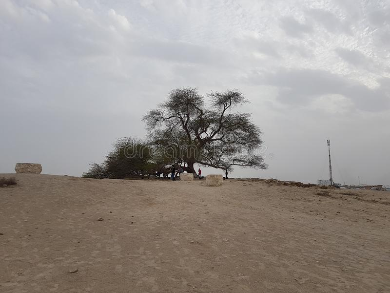 Boom van het Leven in Woestijn royalty-vrije stock foto