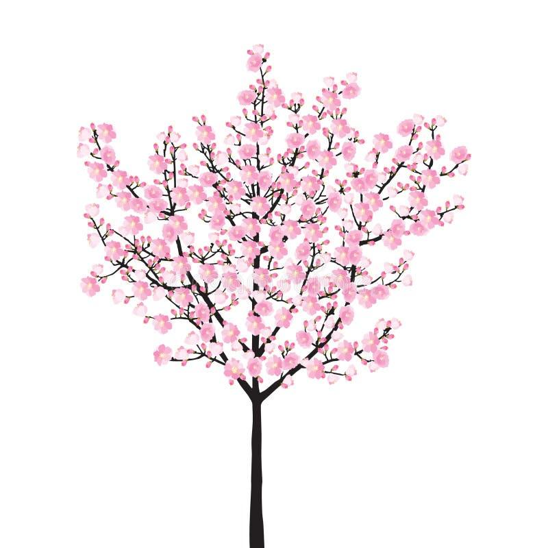 Boom van volledige bloei de roze sakura, het uitstekende zwarte die hout van de Kersenbloesem op witte achtergrond, de achtergron royalty-vrije illustratie