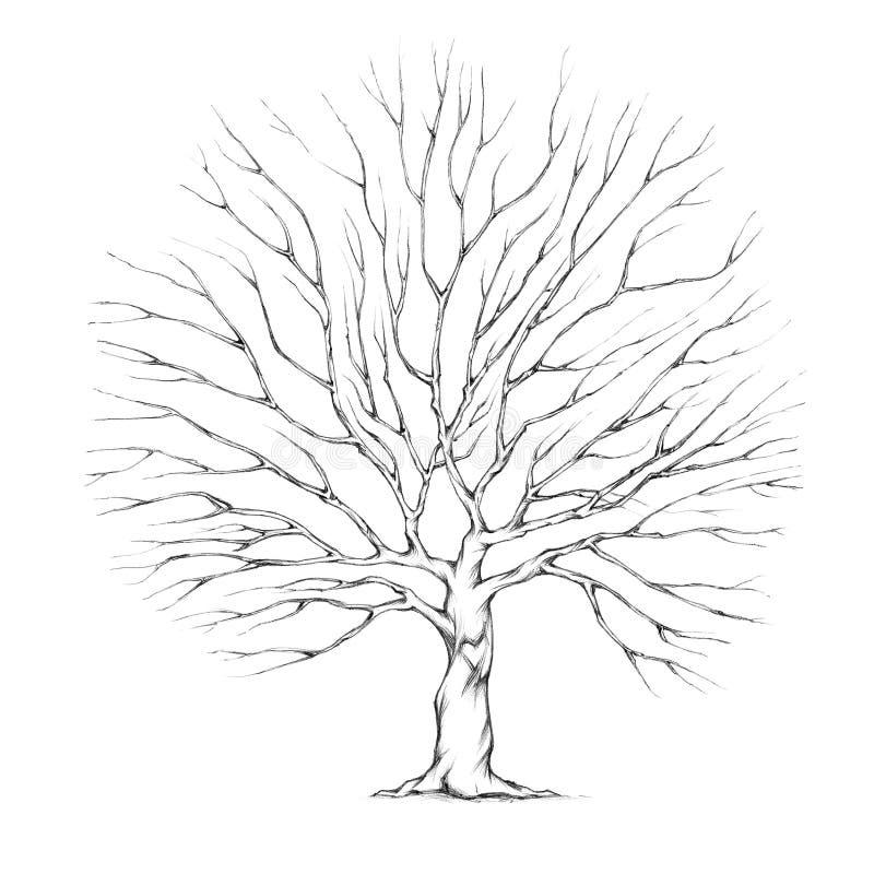 Boom voor huwelijkspaar met grote boomkroon vector illustratie
