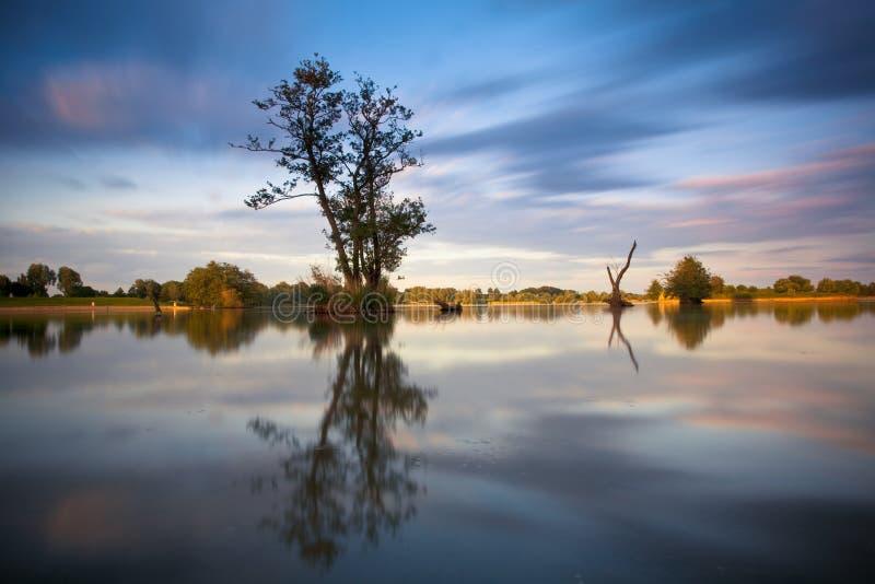 Boom in water royalty-vrije stock afbeelding