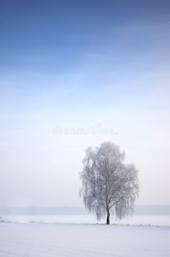 Boom in Winters landschap stock foto's