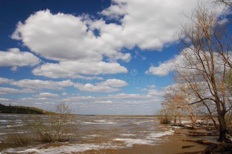 Boom, wolken en blauwe hemel. stock fotografie