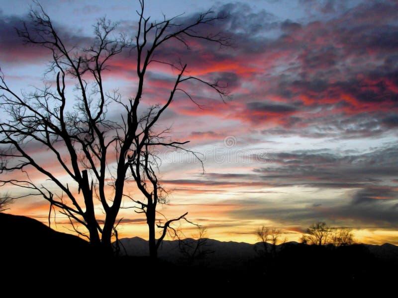 Boom in zonsondergang stock afbeelding