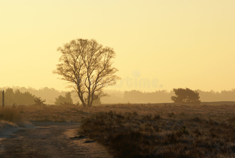Boom in zonsopgang stock afbeeldingen