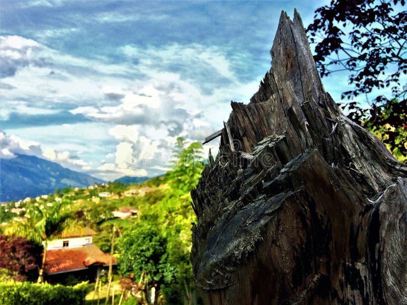 Boomboomstam die het landschap overhangen stock afbeelding