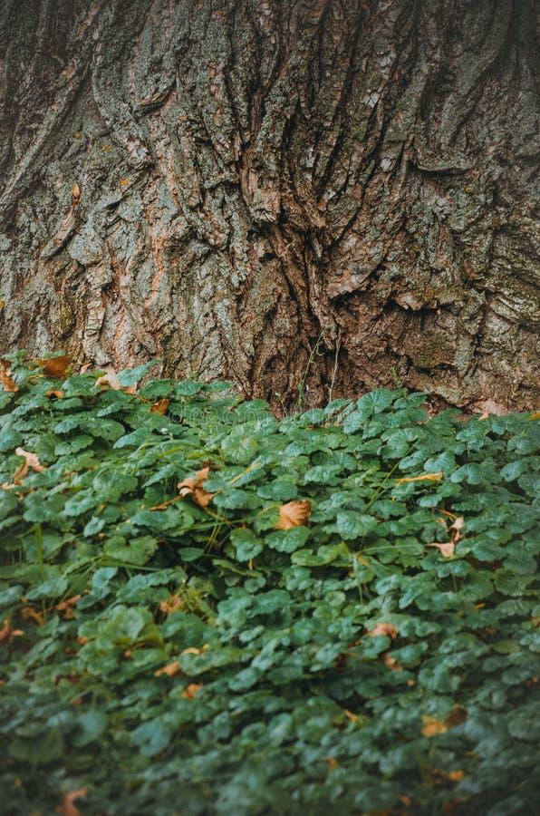 Boomboomstam en groene bladeren stock afbeeldingen
