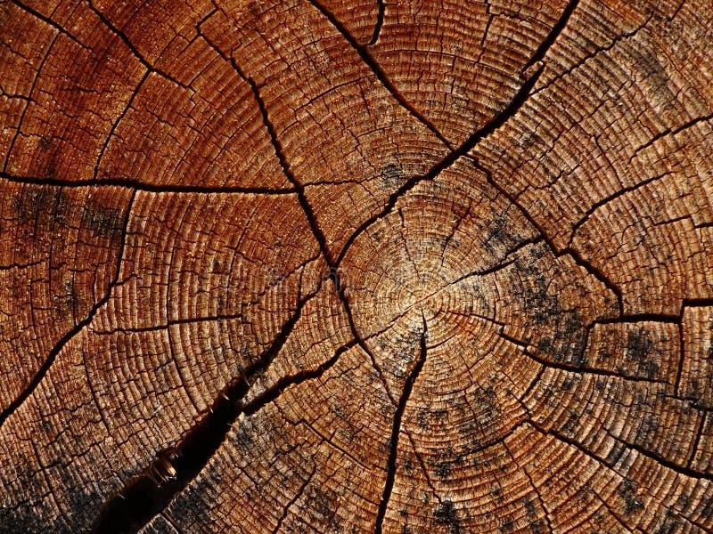 Boomboomstam en zijn jaarringen stock afbeelding