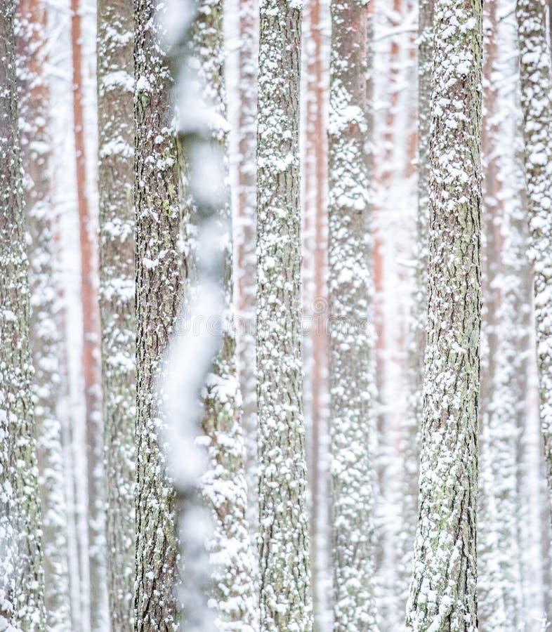 Boomboomstam gekregen met sneeuw wit royalty-vrije stock afbeelding