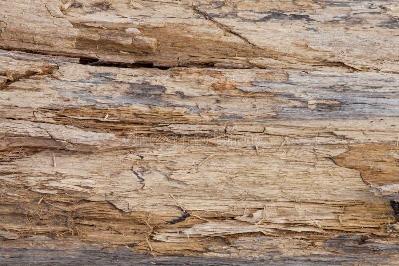 Boomboomstam gestript van schorsachtergrond of textuur stock fotografie