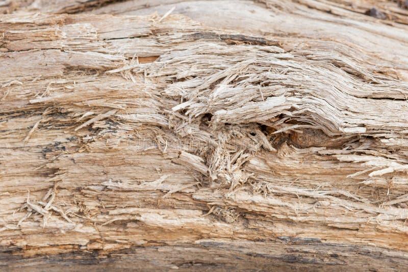 Boomboomstam gestript van schorsachtergrond of textuur stock foto's