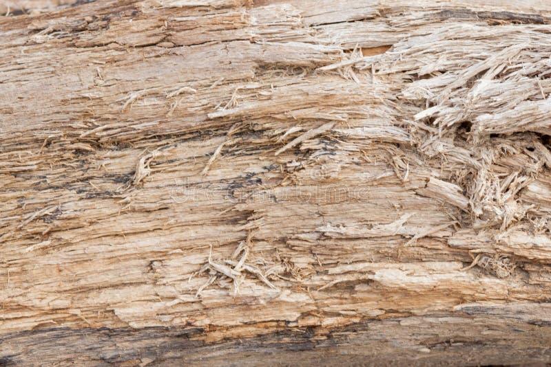 Boomboomstam gestript van schorsachtergrond of textuur royalty-vrije stock foto's
