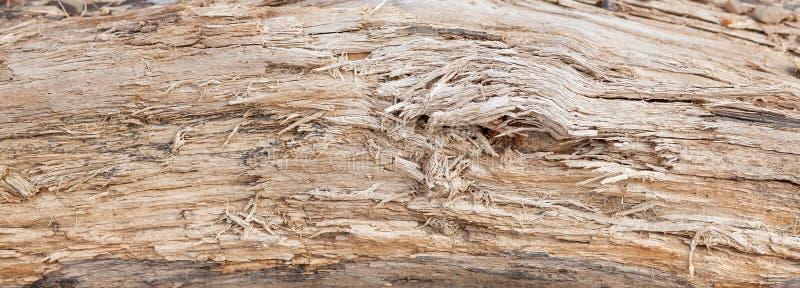 Boomboomstam gestript van schorsachtergrond of textuur stock foto