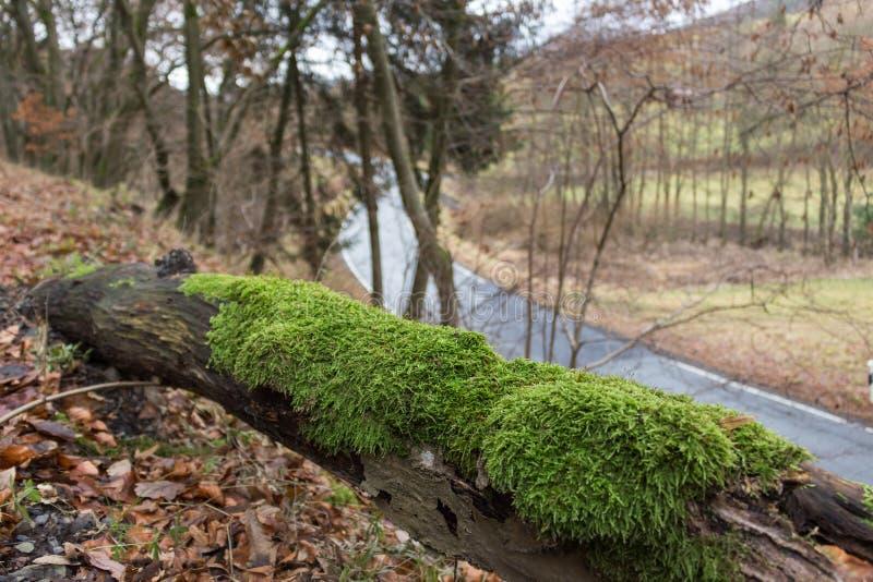 Boomboomstam met mos stock afbeeldingen