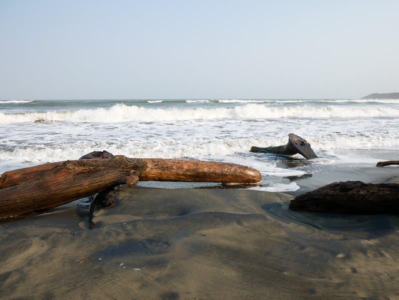 Boomboomstammen die op een Caraïbisch strand dichtbij Cartagena Colombia met golven op de achtergrond liggen royalty-vrije stock afbeelding