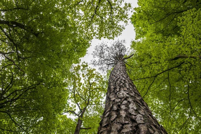Boombovenkanten - Aard groene houten achtergrond royalty-vrije stock afbeeldingen