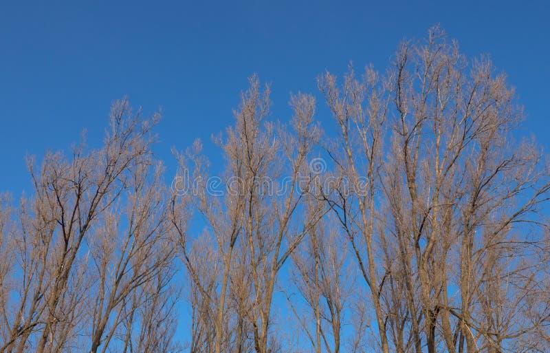 Boombovenkanten in de winter royalty-vrije stock fotografie
