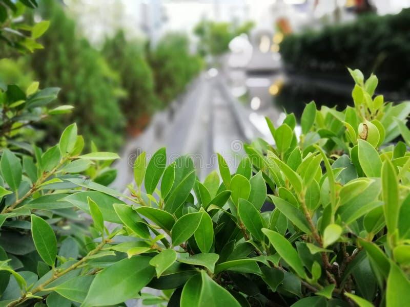 Boombovenkanten, jonge bladeren, kleine bomen, openluchttuinen, natuurlijke achtergrondafbeeldingen royalty-vrije stock afbeeldingen