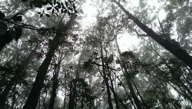Boombovenkanten in wolk en mist op een sleep in Hawaï, Groot Eiland royalty-vrije stock fotografie