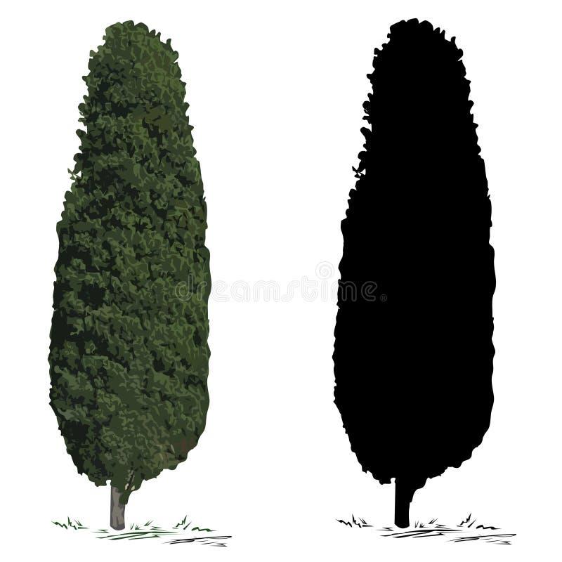 Boomcipres en silhouet van een cipres royalty-vrije illustratie