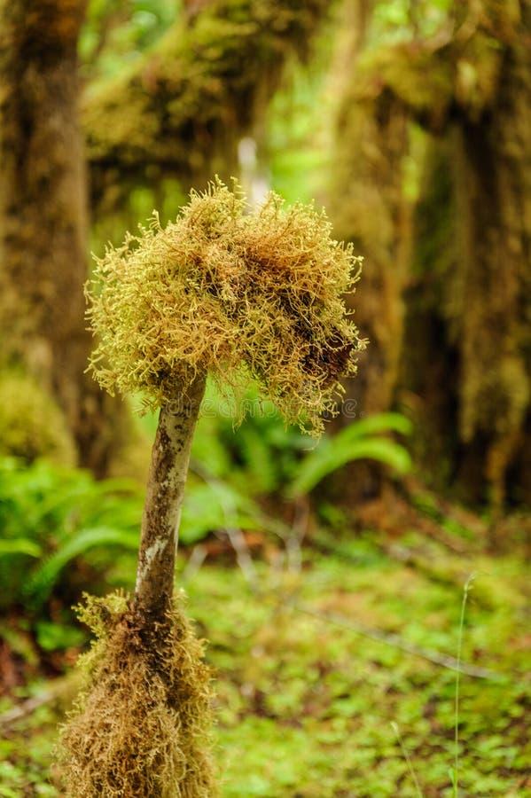 Boomclose-up met mos in het regenwoud wordt behandeld dat stock foto