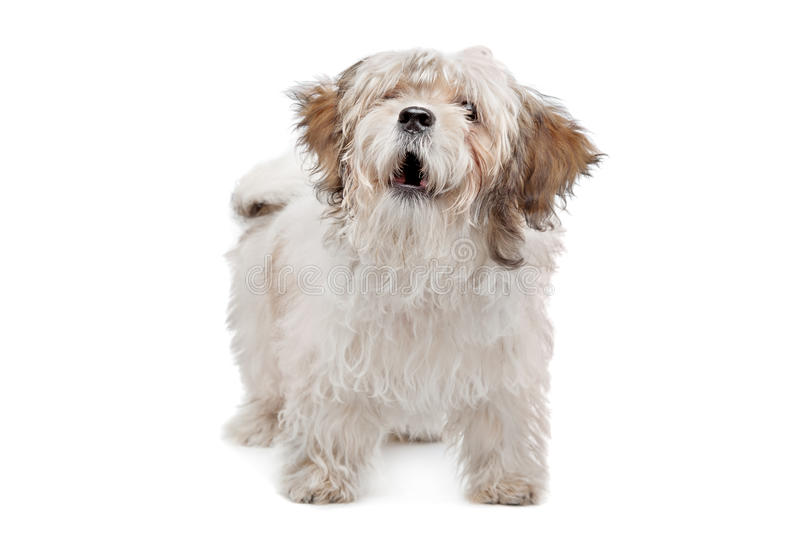 Download Boomer dog stock photo. Image of mongrel, crossbreed - 25682290