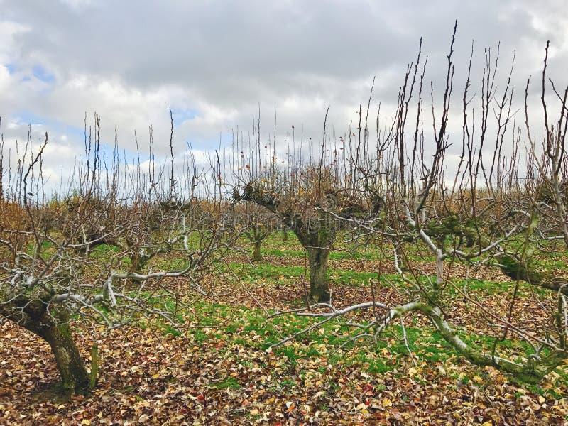 Boomgaard in de herfst royalty-vrije stock foto