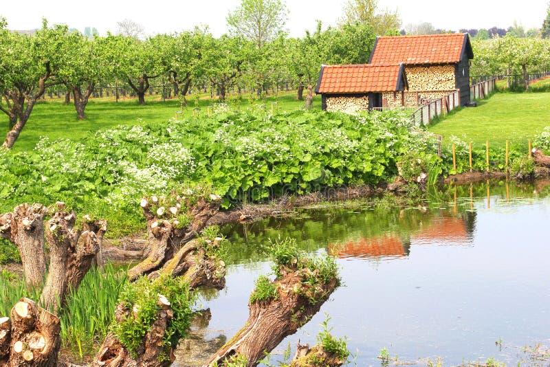 Boomgaard met fruitbomen, Nederland stock foto