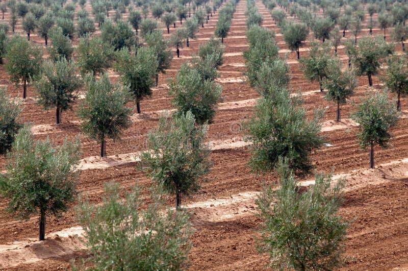 Download Boomgaard van bomen stock afbeelding. Afbeelding bestaande uit rijen - 39102231