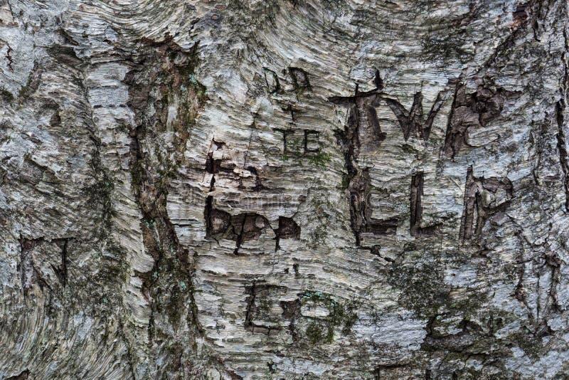 Boomgraffiti in een Boomboomstam die wordt gesneden royalty-vrije stock afbeeldingen