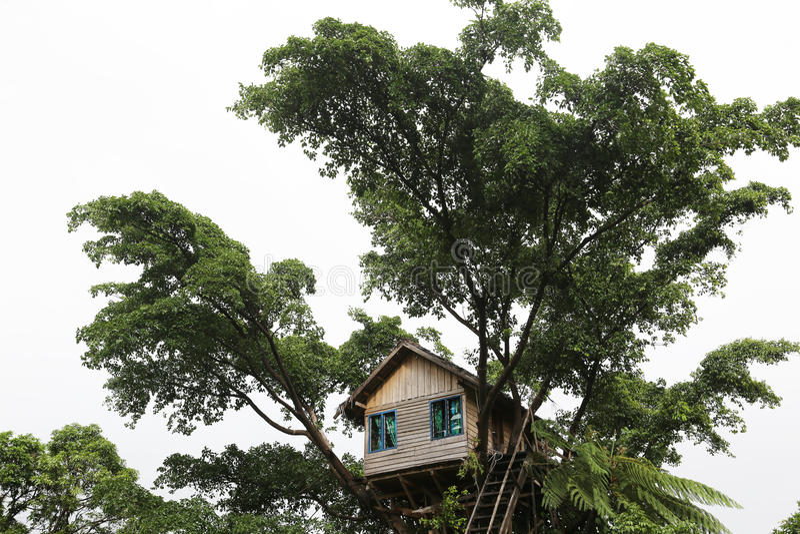 Boomhuis, Vanuatu royalty-vrije stock foto