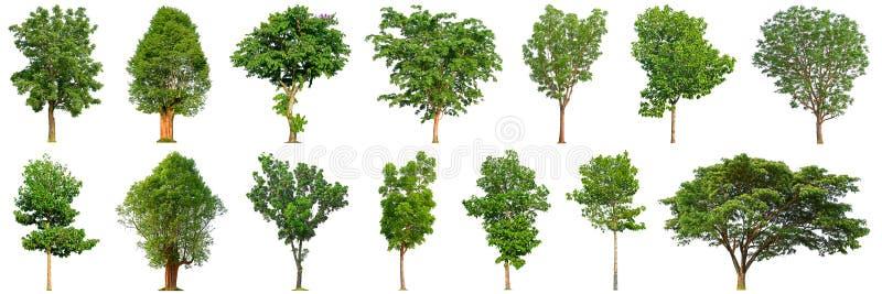 Boominzameling op witte achtergrond 14 bomen wordt geïsoleerd die royalty-vrije stock afbeeldingen
