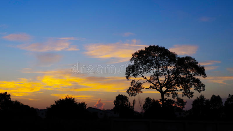 Boomsihouette met aardige zonsonderganghemel stock fotografie