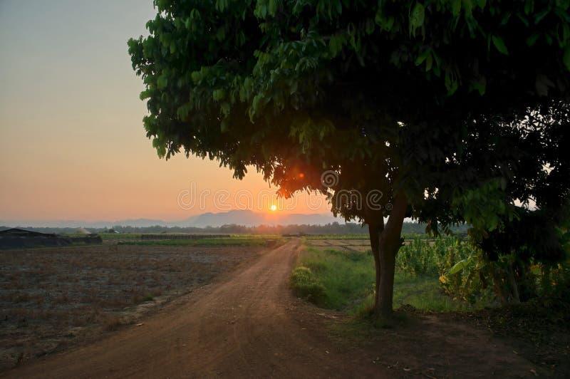 Boomsilhouet en landweg die tot zonsondergang over de bergen leiden stock foto