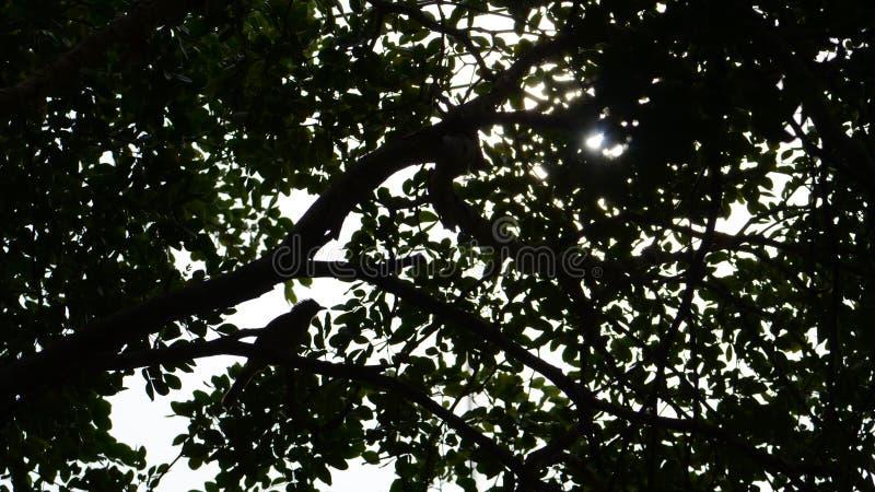 Boomsilhouet met een vogel en een zonlicht stock fotografie
