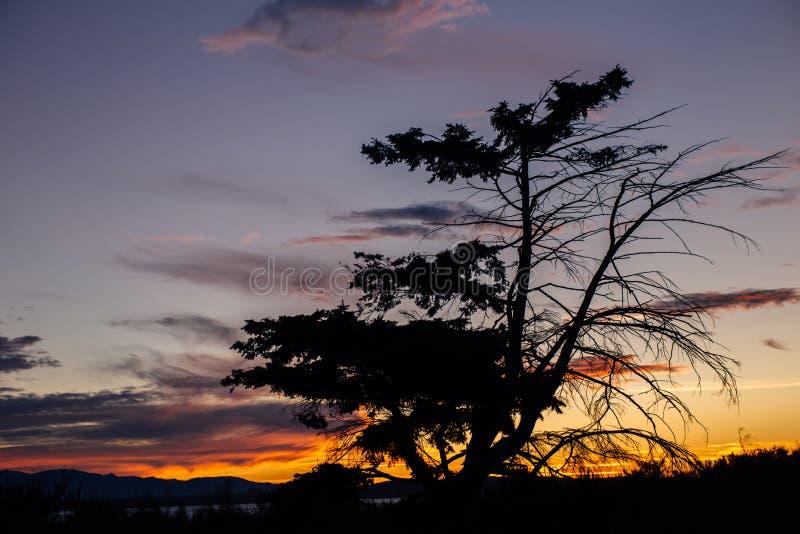Boomsilhouet op Puget Sound stock fotografie