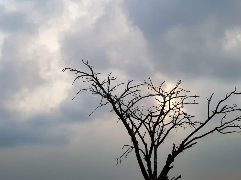 Boomsilhouet tegen de hemel stock foto