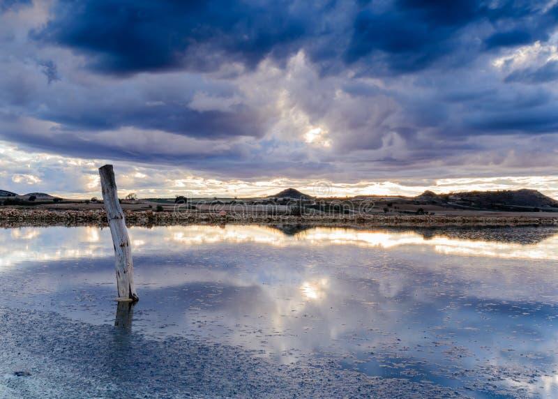 Boomstam droog in de lagune in een blauwe zonsondergang stock afbeelding