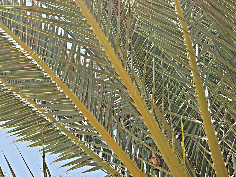 Boomstam en kroon van een palm stock afbeelding