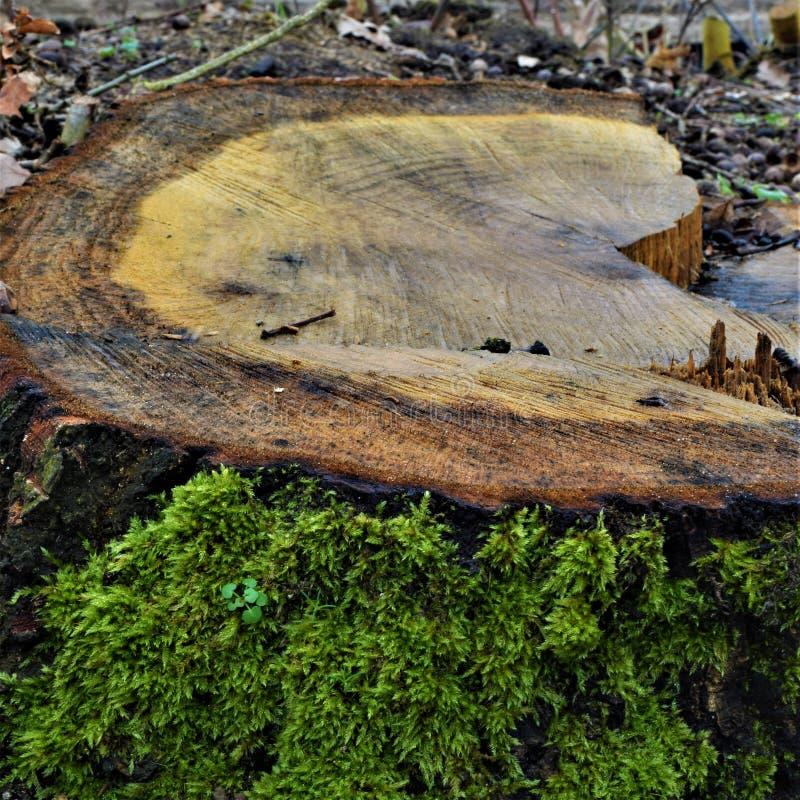 boomstam met groene mos en takken stock foto's