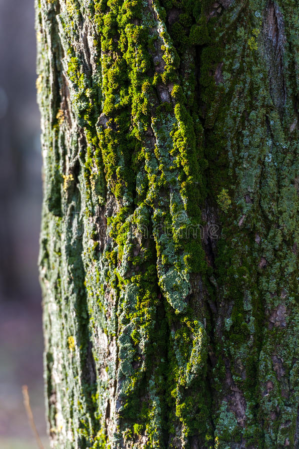 Boomstam met mos stock afbeeldingen