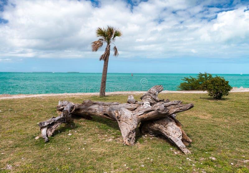 Boomstam op het strand, Zachary Park, Key West - Florida stock foto