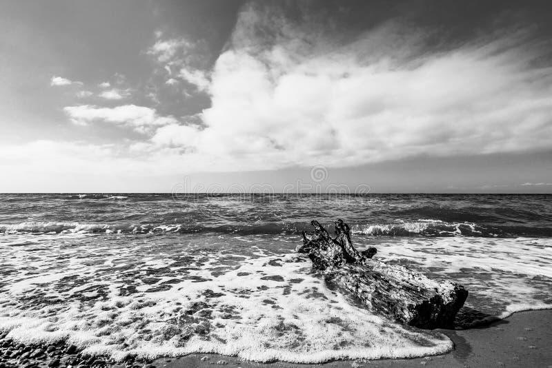 Boomstam op kust van de Oostzee stock afbeeldingen