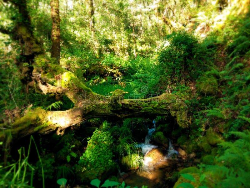Boomstam over stroom met stille waterval in het midden van een groen bos stock afbeelding