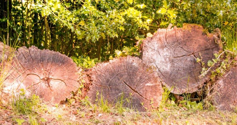 Boomstam van boombesnoeiing stock foto